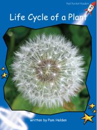 LifeCycleOfPlant
