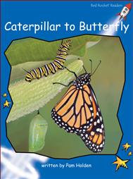 CaterpillartoButterfly.png