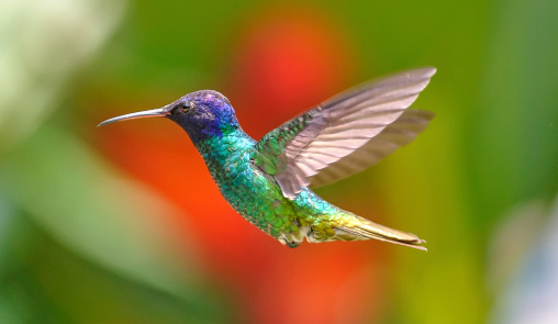hummingbird_narrow